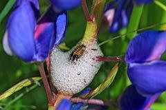 Free Maggot In White Spume Stock Photo - 25564570