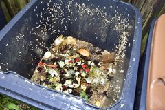 Maggots in a compost bin. Life of its own in a compost bin Stock Image