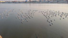 Magh Mela σε Allahabad Στοκ Φωτογραφία