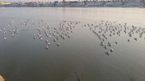 Magh Mela dans Allahabad Photographie stock