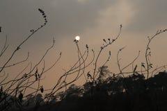 Maghyala india América EUA Dubai Karnataka de Shillong do por do sol Fotos de Stock Royalty Free