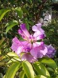 Magi av blomman Arkivfoton