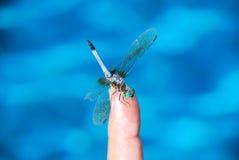 Magia de la libélula Fotografía de archivo libre de regalías