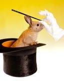 Magia del coniglio Fotografia Stock