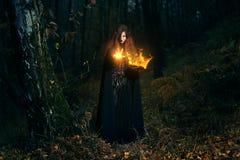 Magia del fuego del bastidor del encargado del bosque fotografía de archivo
