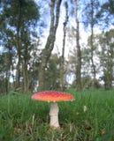 Magia del fungo Immagini Stock Libere da Diritti