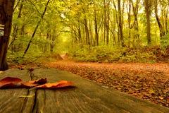 Magia del otoño Fotografía de archivo libre de regalías