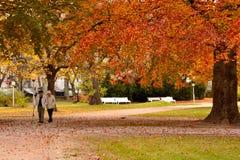 Magia del otoño Imagen de archivo libre de regalías