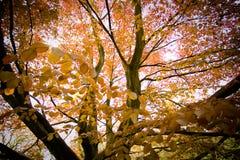 Magia del otoño Fotografía de archivo