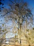 Magia di acqua Fotografia Stock