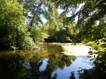 Magia il lago nella foresta Immagini Stock Libere da Diritti