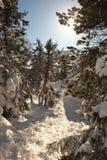 Magia, invierno, bosque nevado en la cumbre del blanco del soporte Nizhny Tagil Rusia Foto de archivo libre de regalías