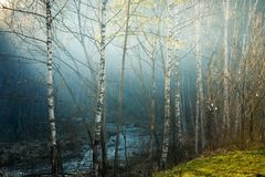 magia leśna Zdjęcie Royalty Free