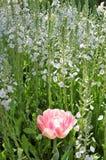 magia ogrodowa Zdjęcia Royalty Free