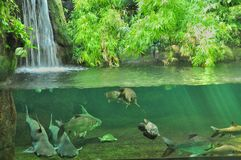 Magic aquarium. Aquarium with a waterfall and lots of animals fish, turtles Royalty Free Stock Photo