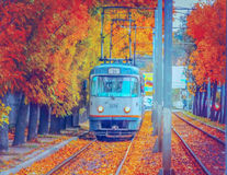 The magic of autumn in Bucharest on tram line 25 stock images