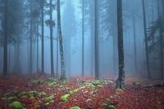 Magic autumn foggy forest landscape royalty free stock photo