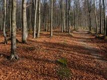 Magic autumn forest. Mountain trail near Krynica Zdroj - Autumn 2012 Royalty Free Stock Photography