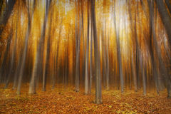 Magic autumn forest Stock Images