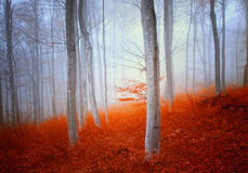 Magic autumn forest. Magic colorful autumn beech forest