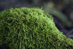 Magic autumn moss in the forest Stock Photo