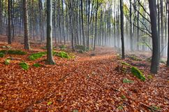 The magic of autumn woods Stock Images