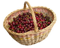 Magic basket with cherry. Stock Photos
