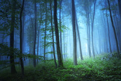 Magic blue color light in mystic forrest Stock Photography