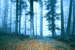 Beautiful foggy forest tree fairytale. Magic blue foggy fairytale landscape with autumn colored leaves on forest floor Stock Photo