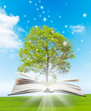 Magic book. With a green tree and the rays of light on the background of nature. Symbol of knowledge Stock Photos