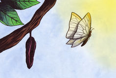 Magic Butterfly (Zen Pictures, 2011) Royalty Free Stock Image