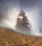Magic Carpathian forest stock photography