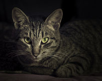Magic cat. High tension in the look of magic cat Royalty Free Stock Photography