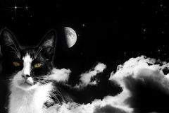 Magic cat on cloudy sky Royalty Free Stock Photo