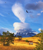 Magic cloud and flocks of Andean condors Stock Photography