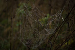 The magic cobweb. A dew on the kell Stock Photography