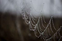 The magic cobweb. A dew on the kell Royalty Free Stock Images
