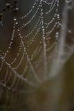 The magic cobweb. A dew on the kell Royalty Free Stock Photo