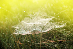 Magic cobweb in dewy grass Royalty Free Stock Images