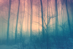 Magic color afternoon beech forest Royalty Free Stock Photo