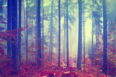 Magic color vintage forest Royalty Free Stock Photos