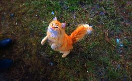 Magic colorful world with a magic cat Royalty Free Stock Photo