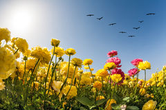 Magic country of the sun and flowers. Magic country of the sun, sky and flowers. Migratory birds flying high in the sky. The southern sun illuminates the fields Stock Photography