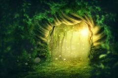 Magic dark forest. With sunshine Royalty Free Stock Photo