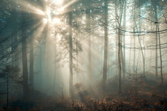 Magic december forest Royalty Free Stock Photo