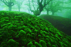 Magic deep forest with moss bubbles Royalty Free Stock Photography
