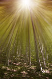 Magic dreams forest. Sun rays through a fantasy forest Royalty Free Stock Photo
