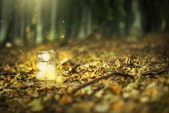 Magic fairy forest with fireflies and a bright lamp, mysterious. Lantern in a surreal forest with dried leaves and dreamy lights royalty free stock image