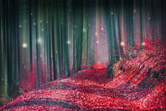 Magic fairytale forest with fireflies lights. And mysterious road Stock Photo