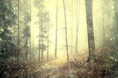 Magic fairytale forest landscape. Magical autumn colored foggy forest fairytale with rainfall. Color filter effect used Royalty Free Stock Image